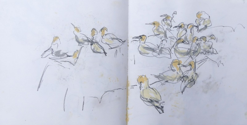 Bass Rock sketchbook page, Liz Myhill