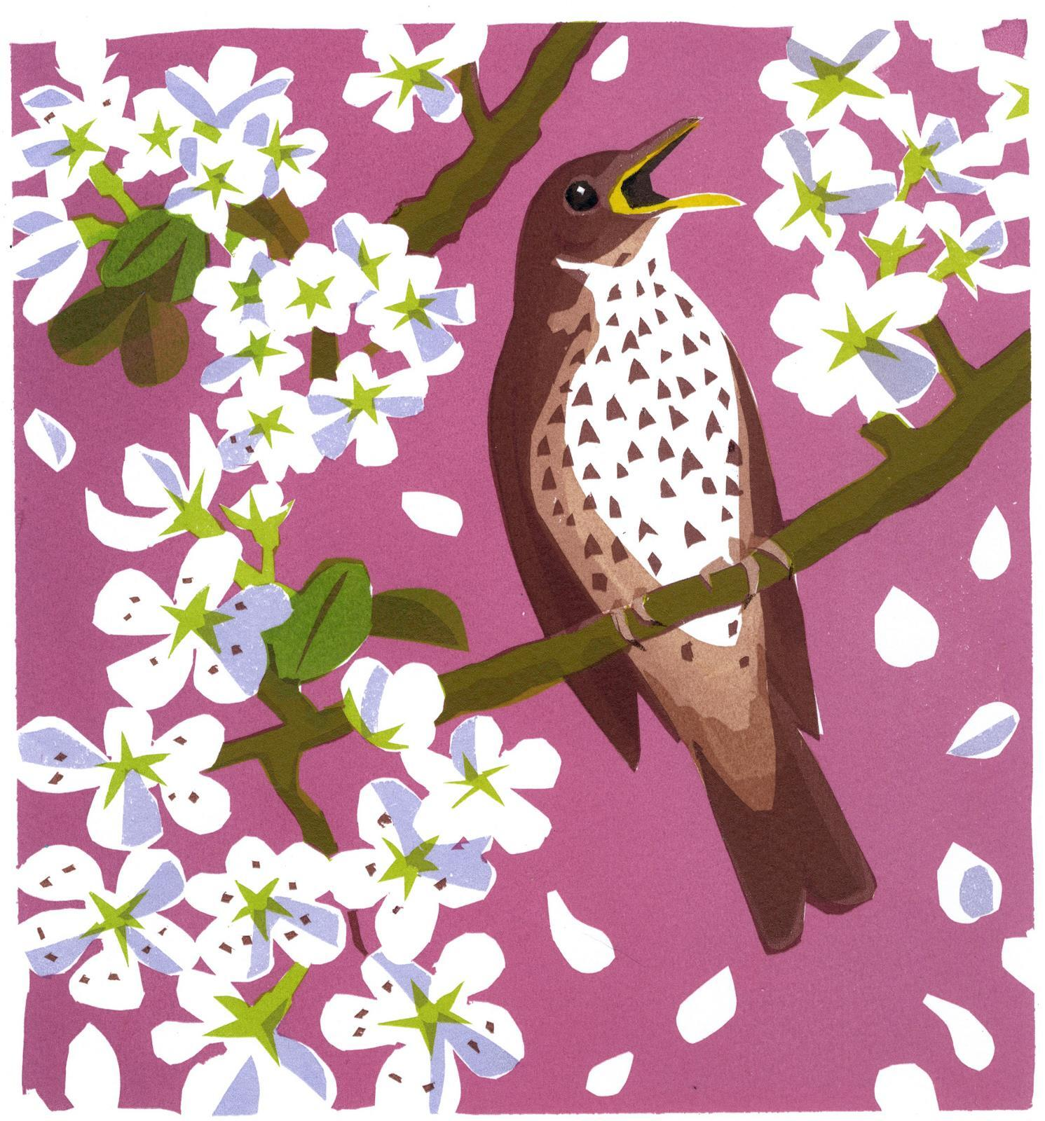<p>Song Thrish Blossom by Carry Akroyd</p>