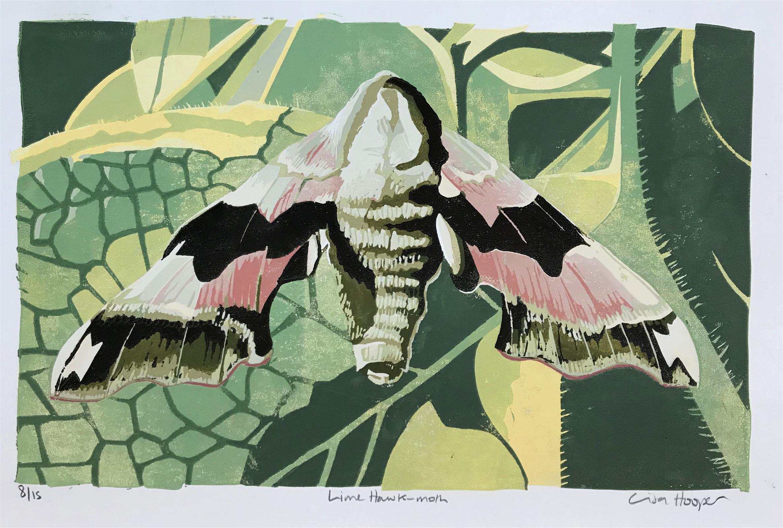 <p>Lime Hawk Moth by Lisa Hooper</p>
