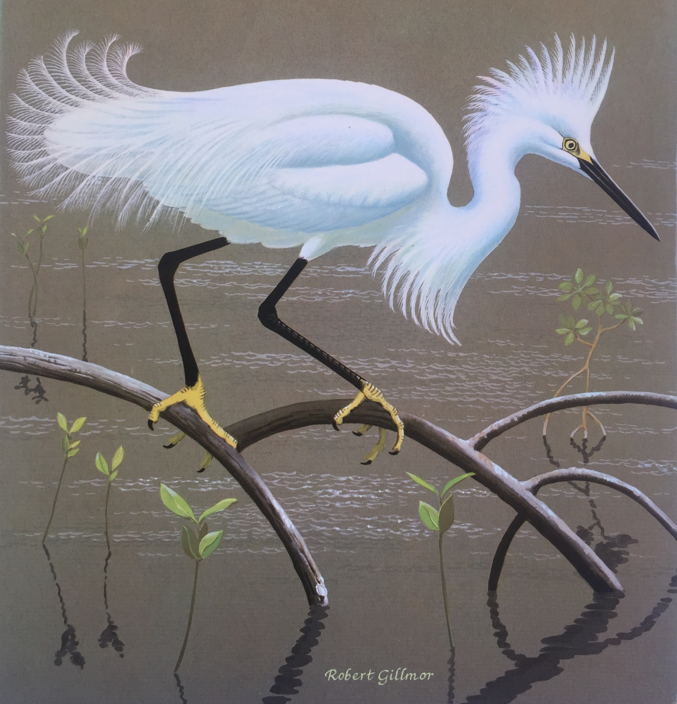 Snowy Egret from the cover of The Herons of the World by Robert Gillmor
