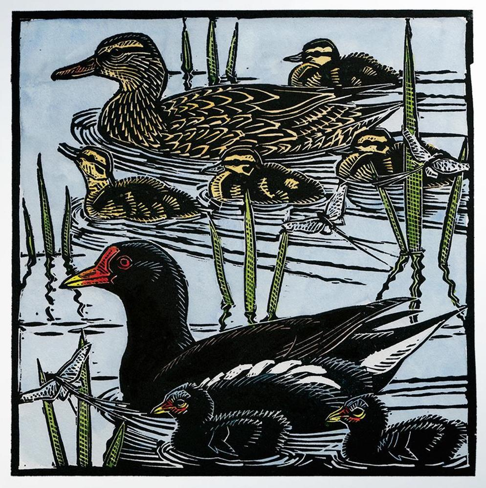 Moorhens, Mallards and Mayflies by Richard Jarvis