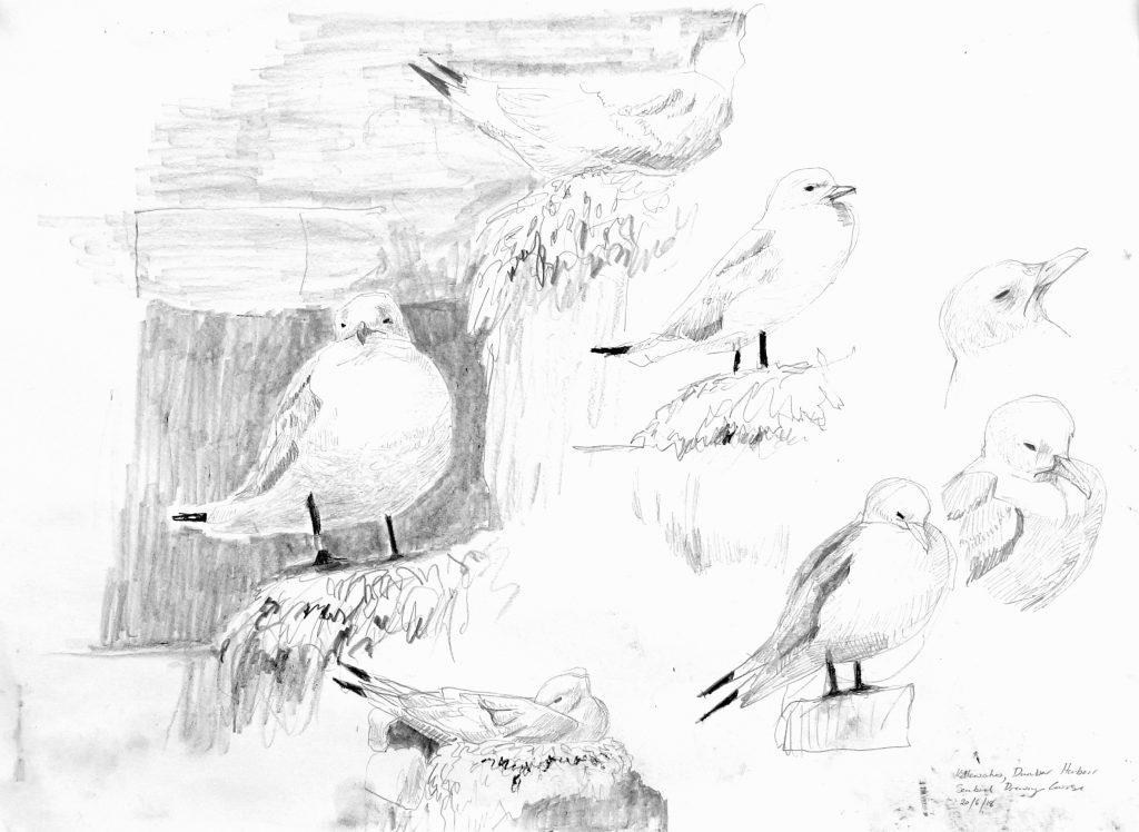 Kittiwakes, Dunbar, Adele Pound