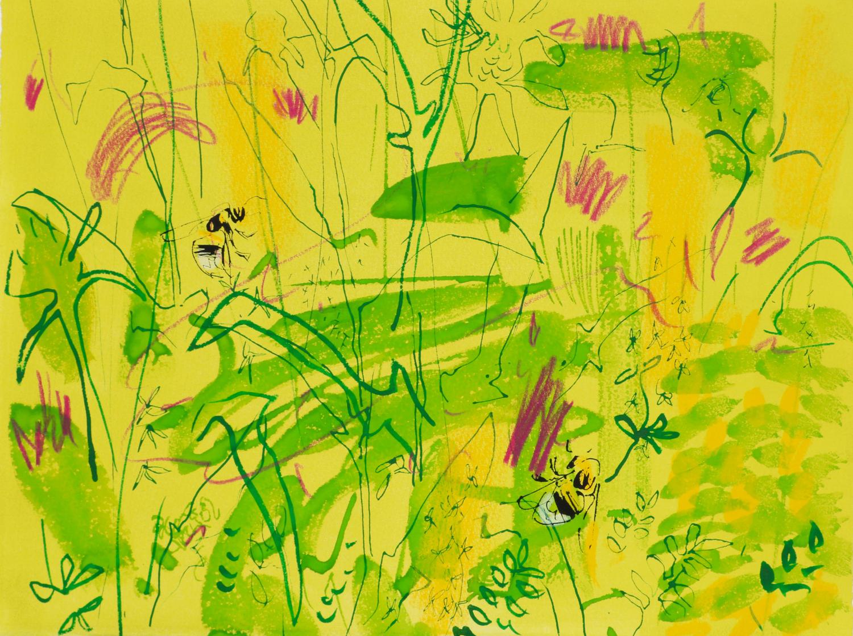 <p>White tailed bumblebee and knapweed 3 by Nik Pollard</p>
