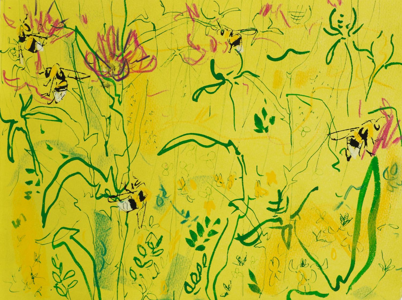 <p>White tailed bumblebee and knapweed 4 by Nik Pollard</p>