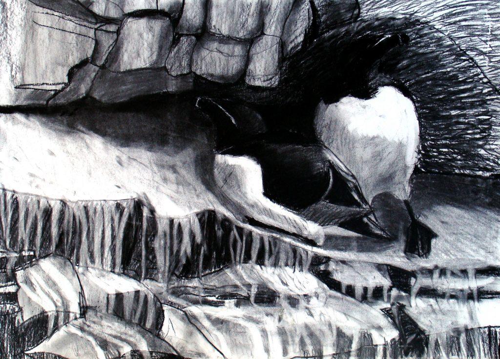 Razorbills, St Abb's, Adele Pound