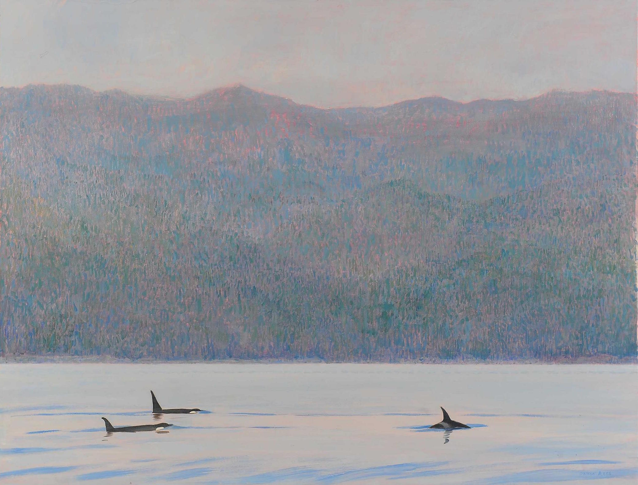 <p>Orcas, Blackfish Sound BC by Darren Rees</p>