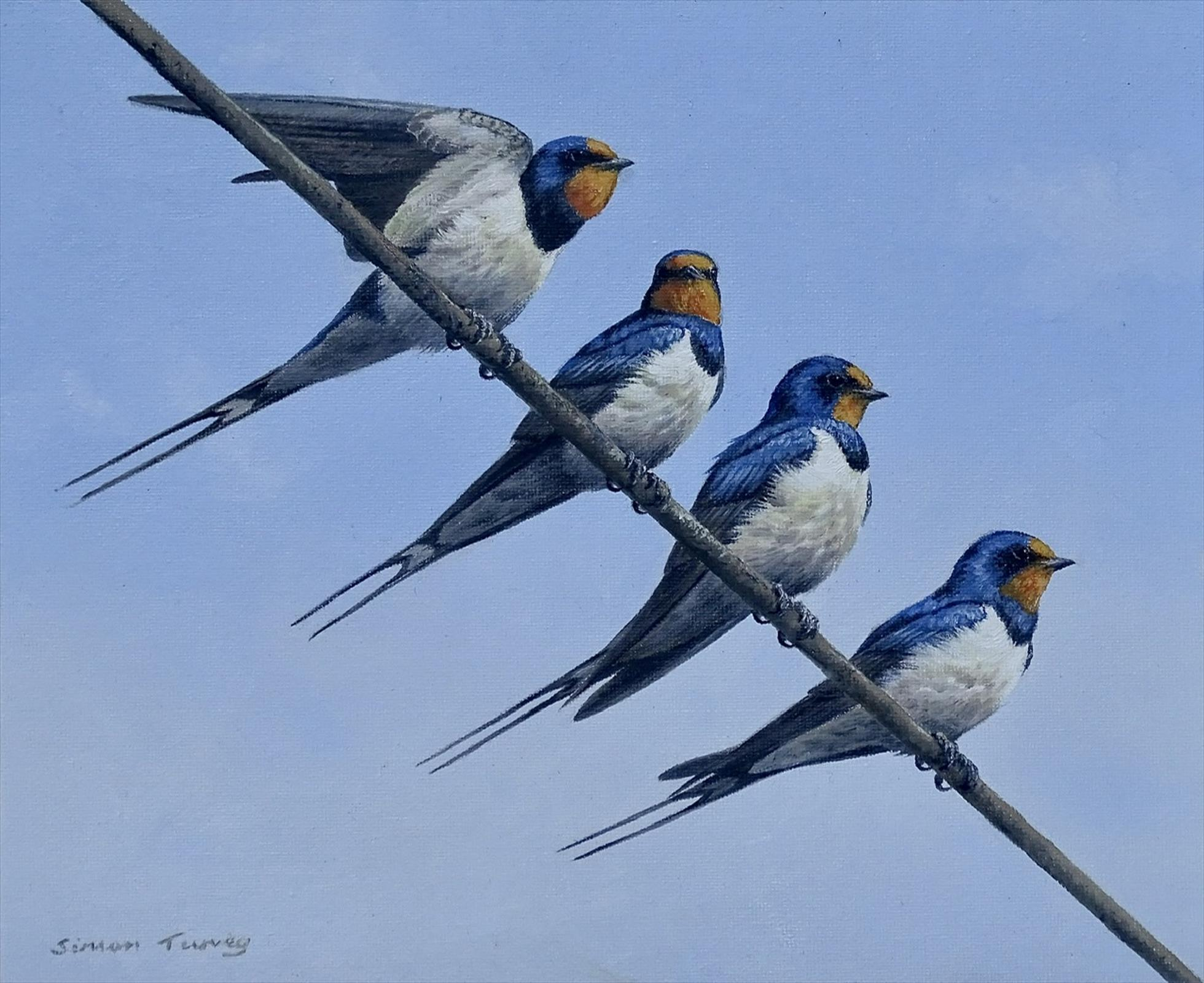 Swallows by Simon Turvey RSPB Award Winner 2020
