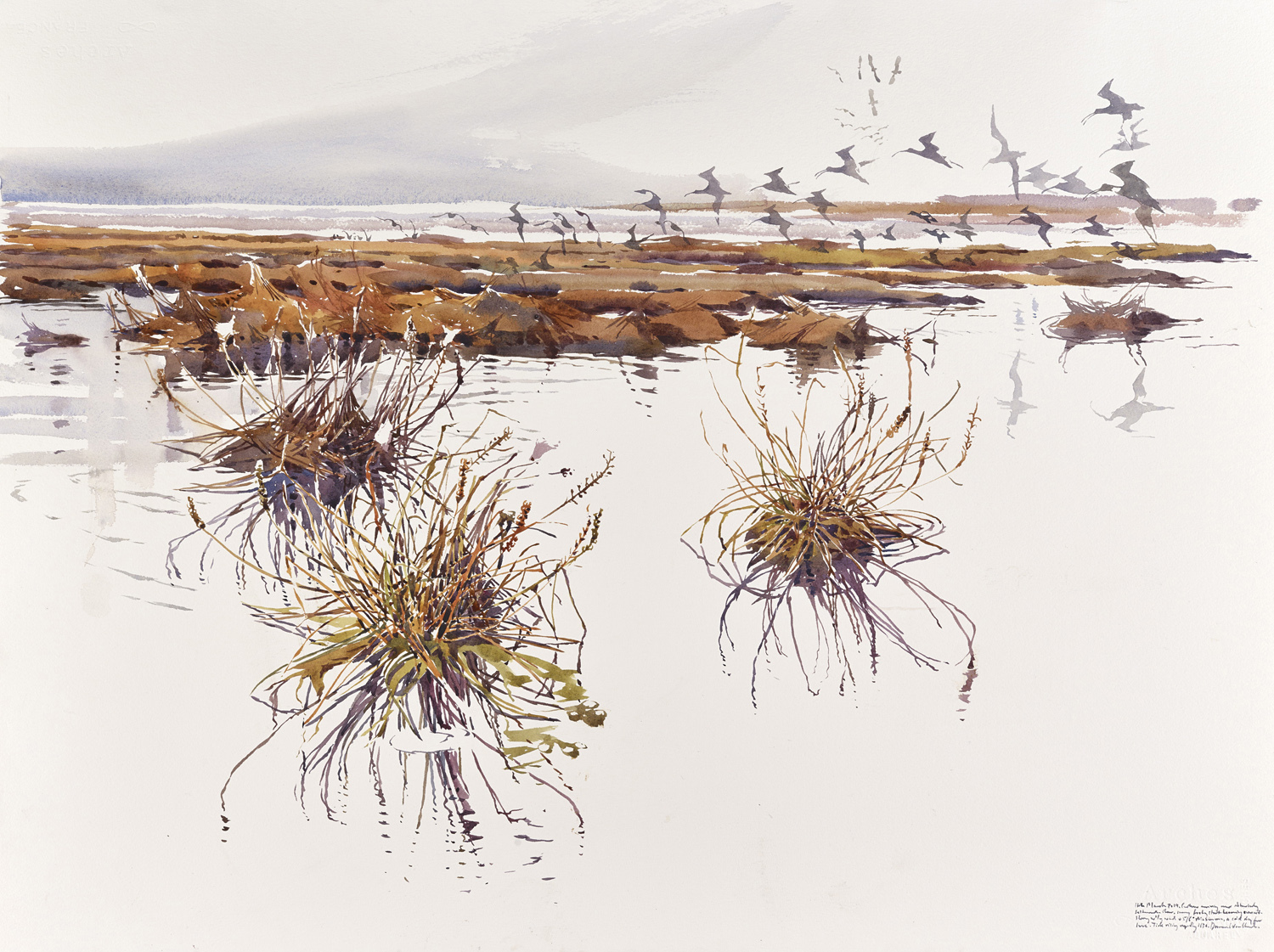 Curlew arrival over flooded saltmarsh by Darren Woodhead