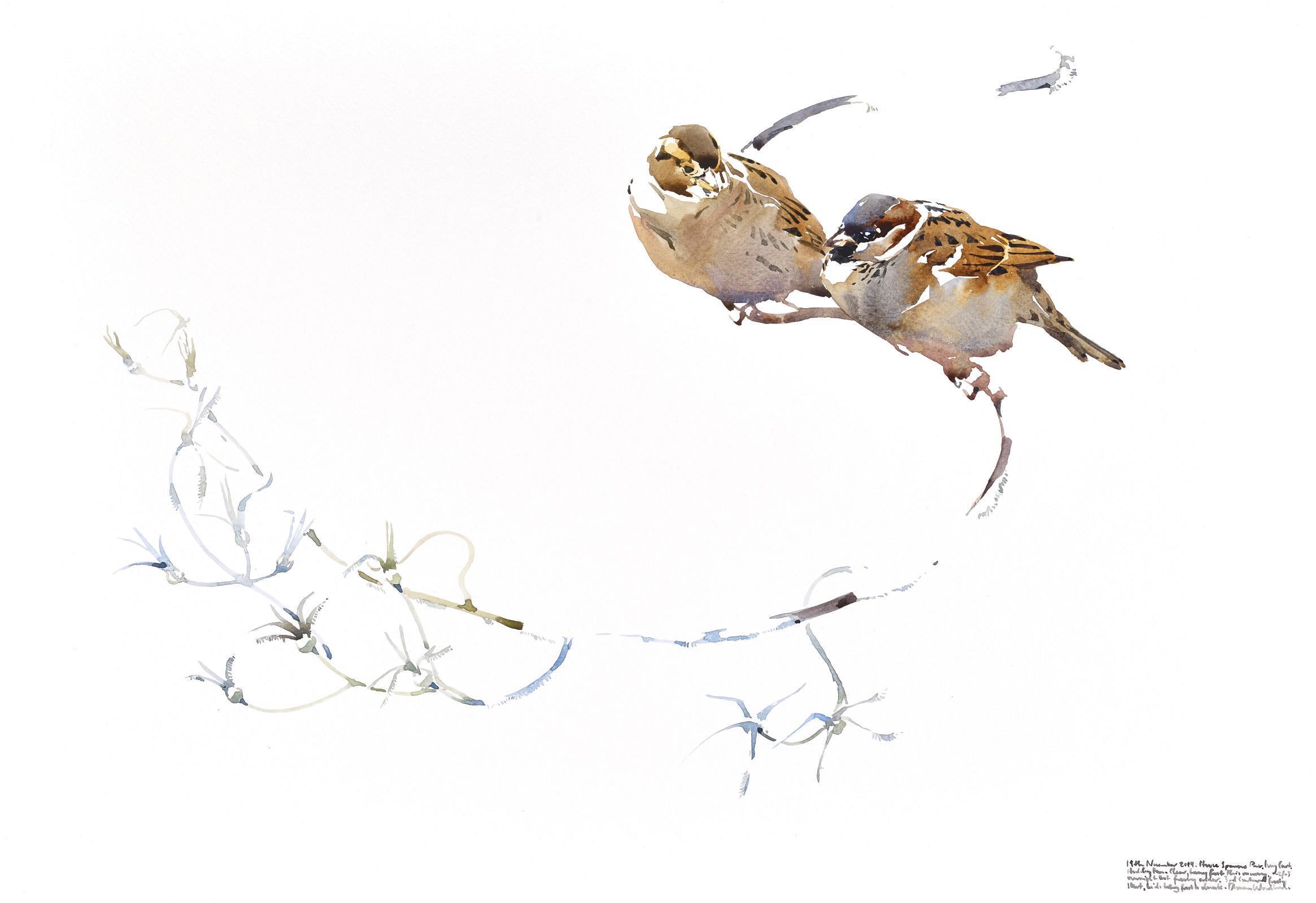 <p>House Sparrow pair on garden twist by Darren Woodhead</p>
