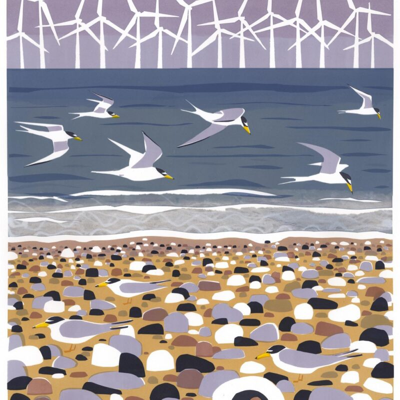 Big Terns and Little Terns IV by Carry Akroyd