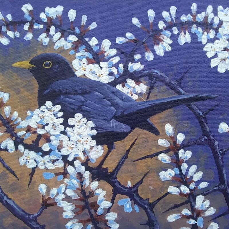 Blackbird Blossom by Richard Allen
