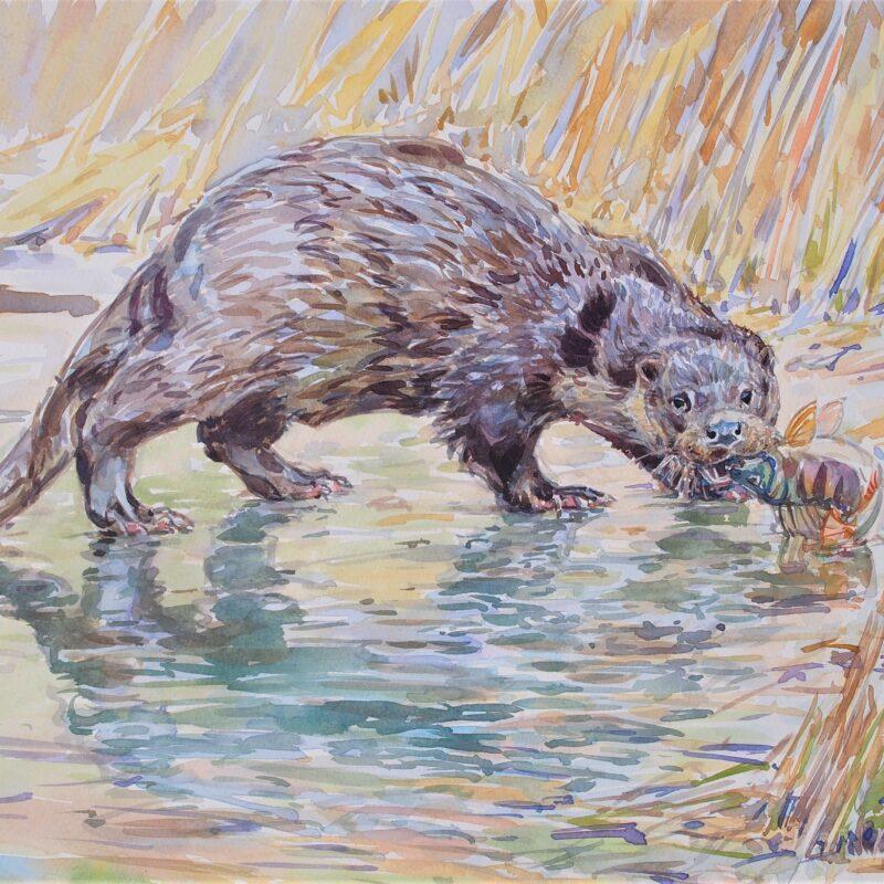 Otter and Perch by David Bennett