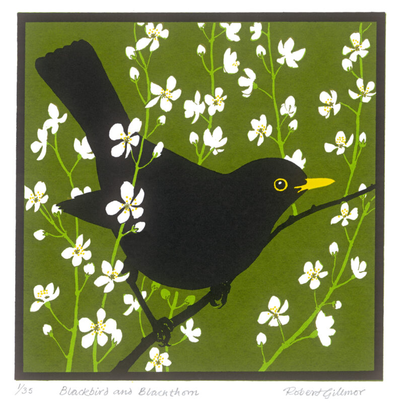 Blackbird Blackthorn by Robert Gillmor