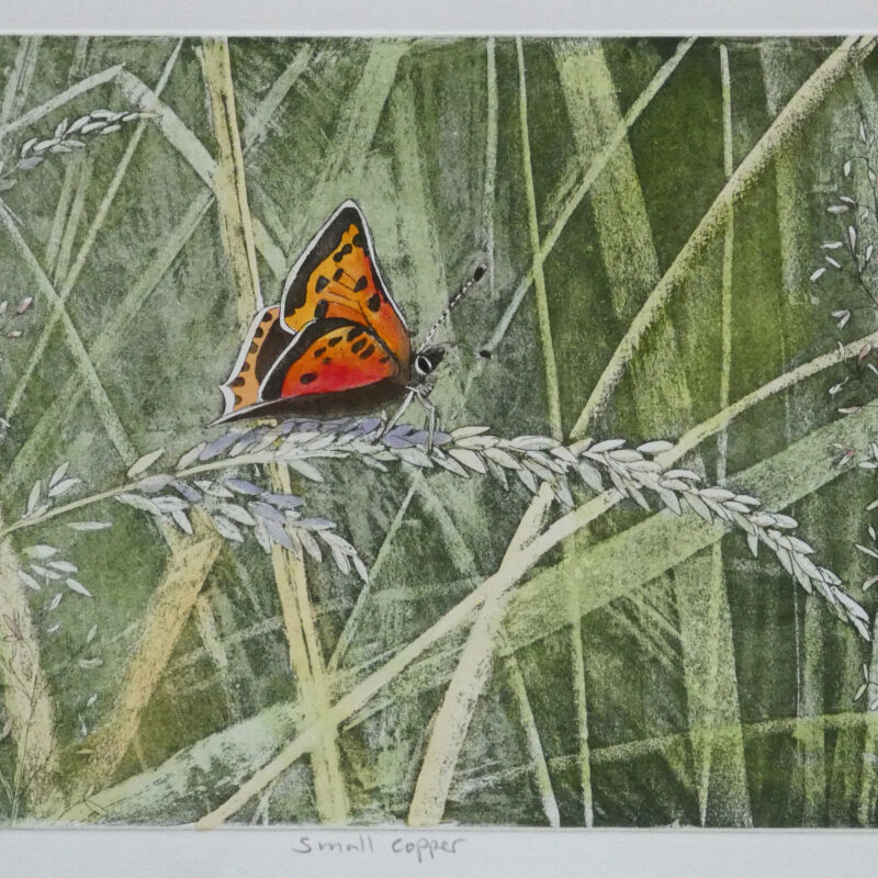 Small Copper by Lisa Hooper