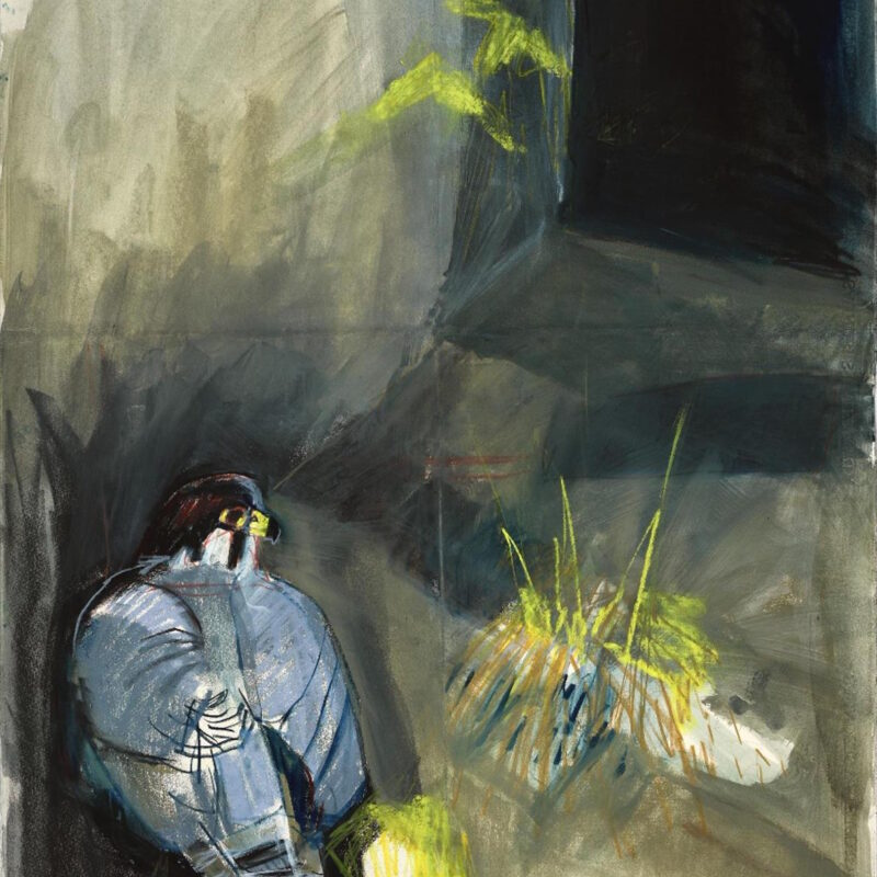 Resting Peregrine by Kittie Jones