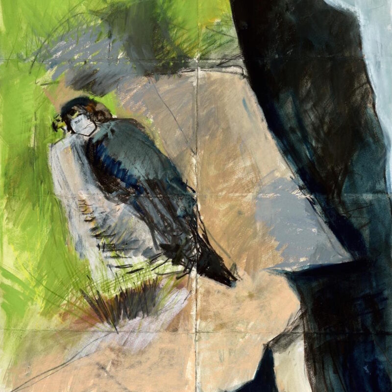 Sitting Peregrine by Kittie Jones