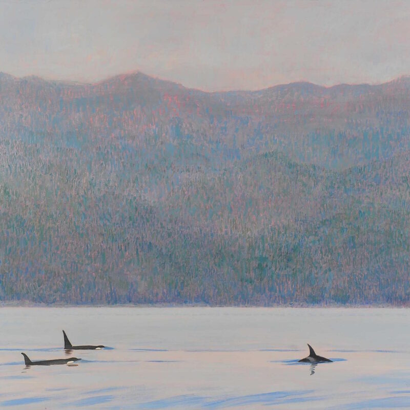 Orcas, Blackfish Sound BC by Darren Rees