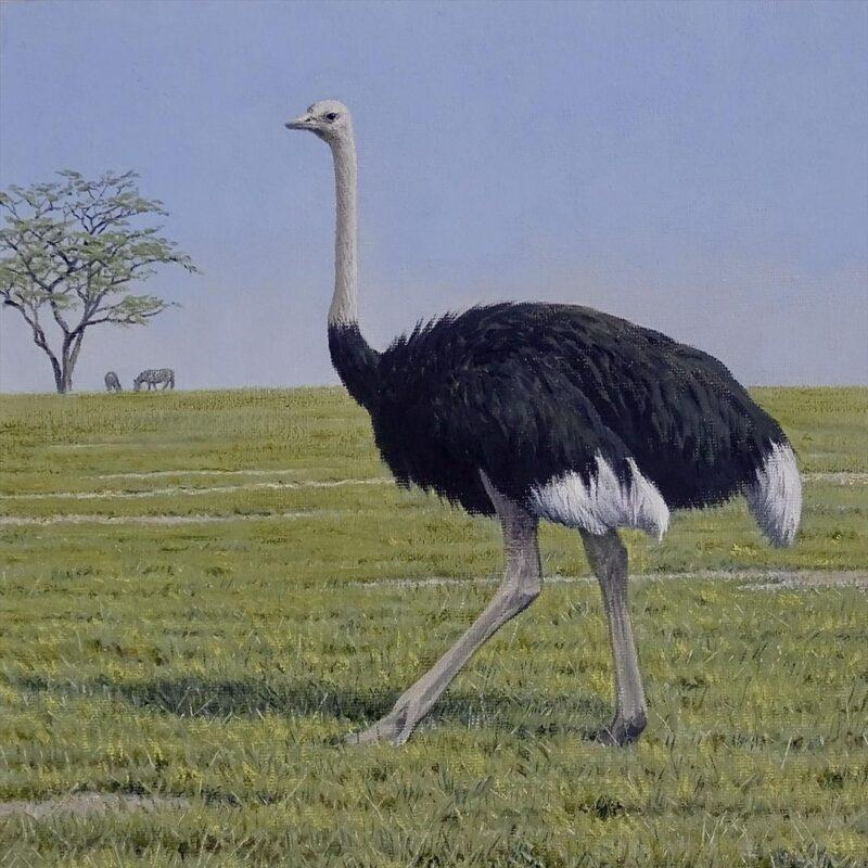 Ostrich Masai Mara by Simon Turvey