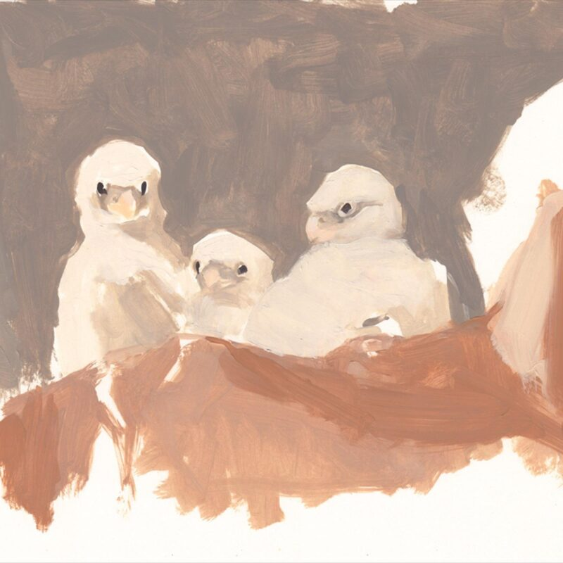 Three young Peregrines by Esther Tyson