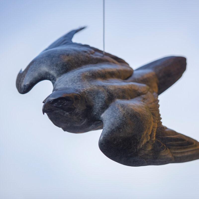 Peregrine II (flying free) by Nick Bibby