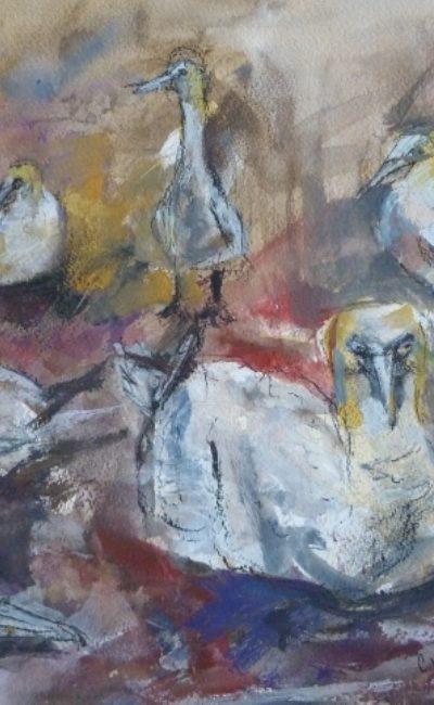 Gannets of Bass Rock (640x483)