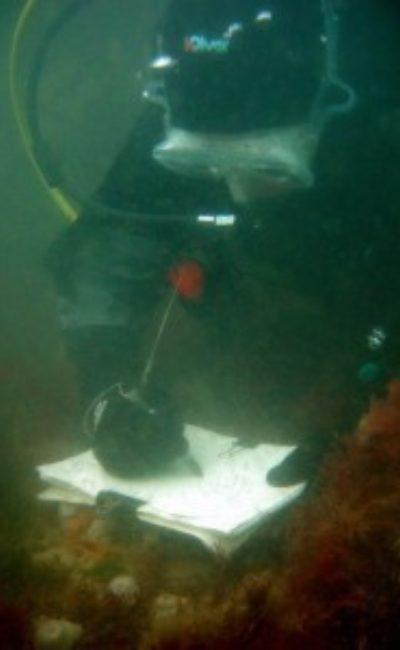 harriet-mead-diving