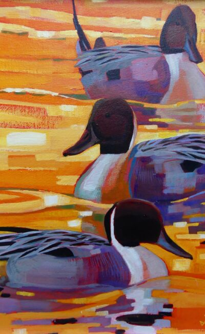 Pintails by Brin Edwards