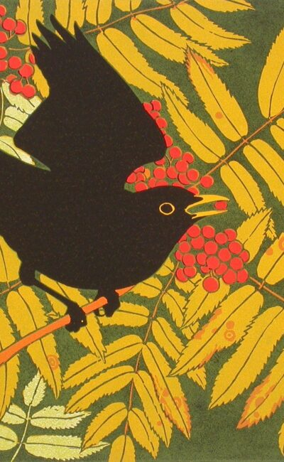 Blackbird in rowan by Robert Gillmor