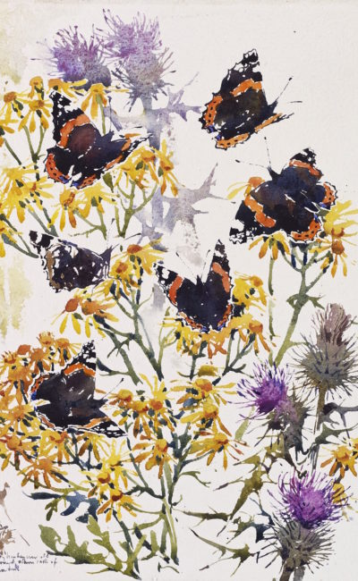 Darren Woodhead Red Admirals and passing Hobby