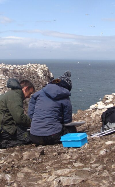 Amongst the Gannet colony on the Bass Rock. Getting some advice from a tutor.