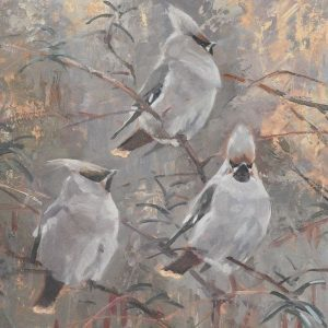 Waxwings by Tim Wootton